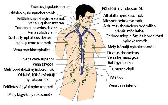 Hodgkin- és Non-Hodgkin lymphoma | Gyermekgyógyítók