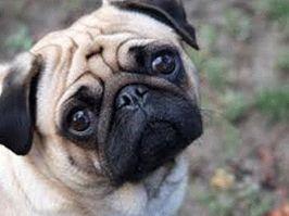 Kutyafogyókúra: Kövér a kutya? Van megoldás!