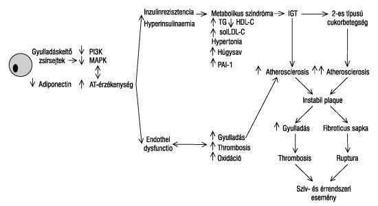 zsírsejtek égetésének folyamata