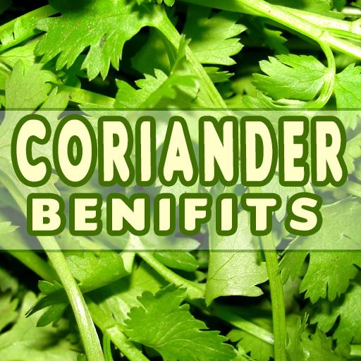 Stock fotó - Bunch of fresh coriander on white background