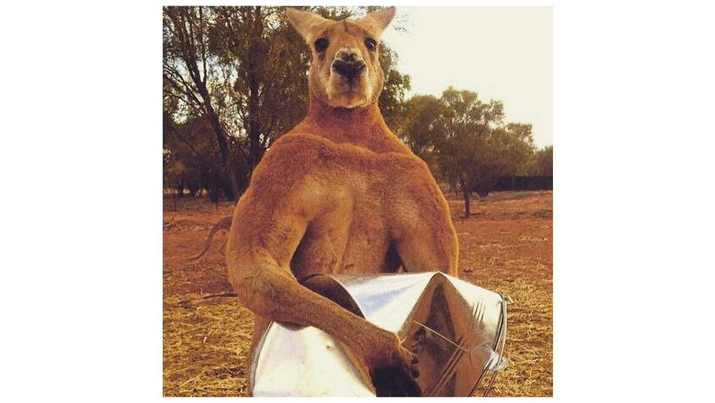 Fogyás kenguru-módra: a kangoo a legújabb őrület | ZAOL