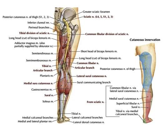 A peronealis ideg neuropathiája - Talpbetét