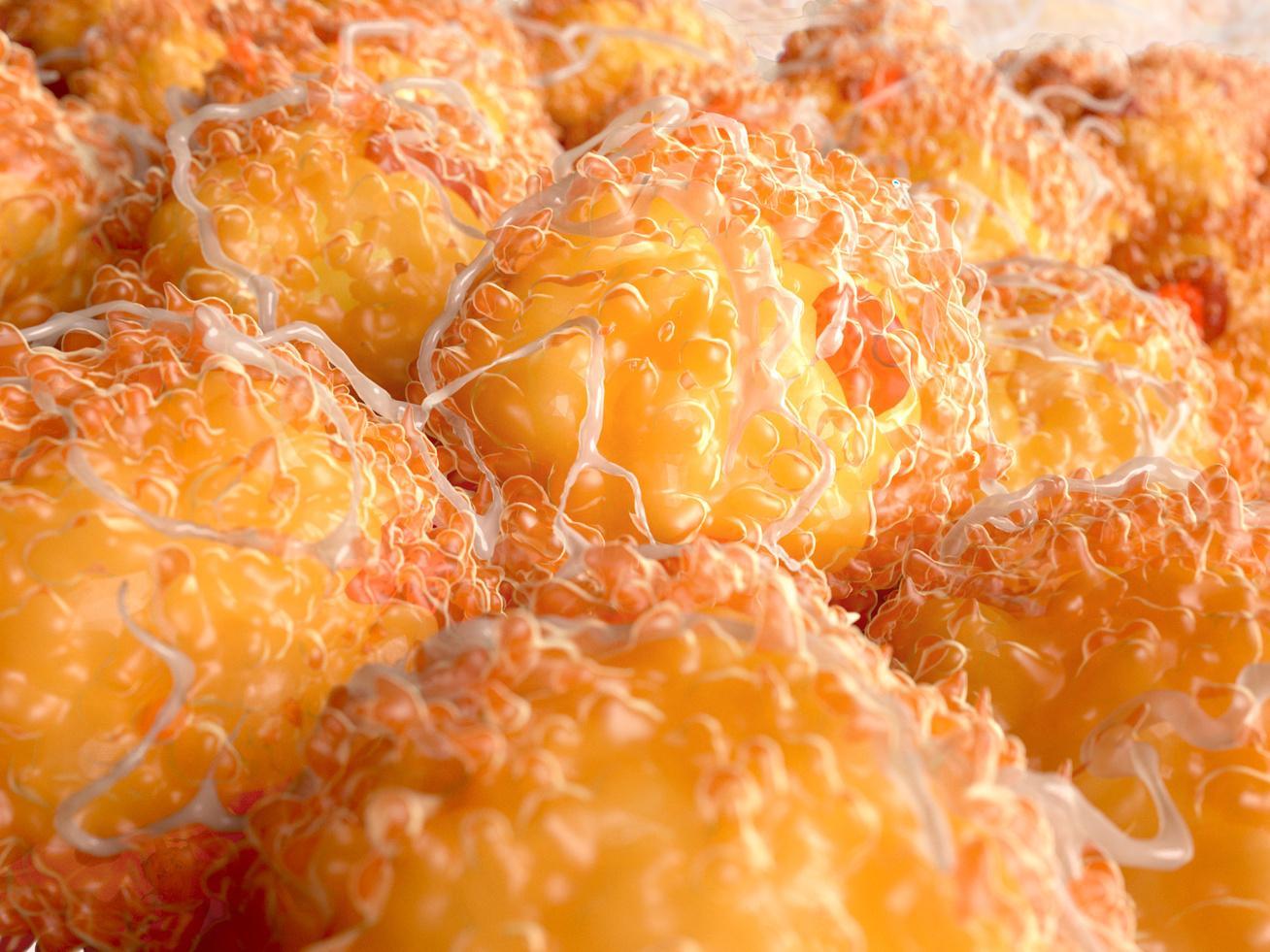 7 tuti zsírégető étel, amit érdemes enni