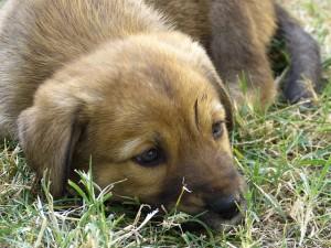 6 lehetséges ok a kutya hirtelen súlyvesztésére